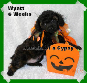 wyatt6weeks.jpg